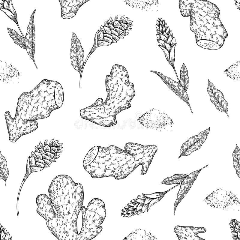 Nahtloses Vektormuster von Ingwerwurzeln und -blumen Hand gezeichnet Graviertes würziges Gemüse Lebensmittelinhaltsstoff vektor abbildung