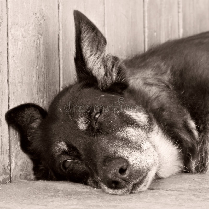 Download Naida stock image. Image of mammal, relax, rest, dream - 1415315