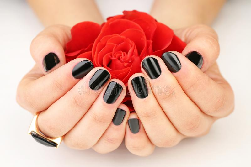 Nail art concept. Beautiful female hands. With manicure holding flower, closeup royalty free stock photo