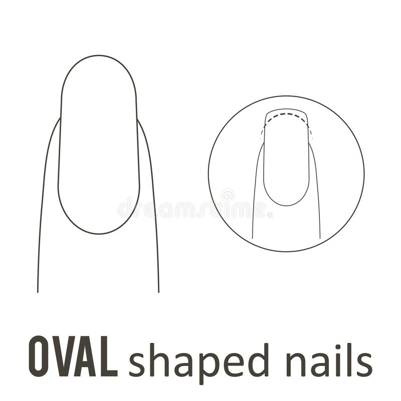 Nail shape oval. Nail manicure. How to make oval nail shape. Vector vector illustration