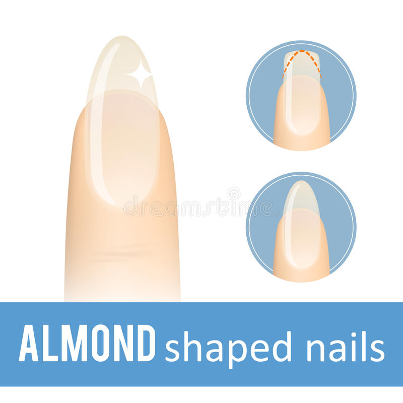 Nail shape almond stock vector. Illustration of fake - 97748796