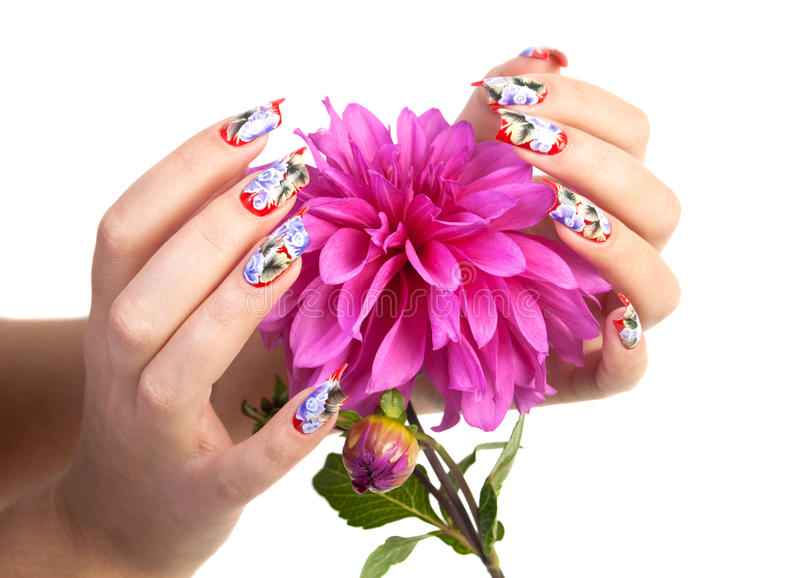 NAILS AND FLOWER. Two hands of the girl with beautiful nails hold a flower, on a white background stock photography