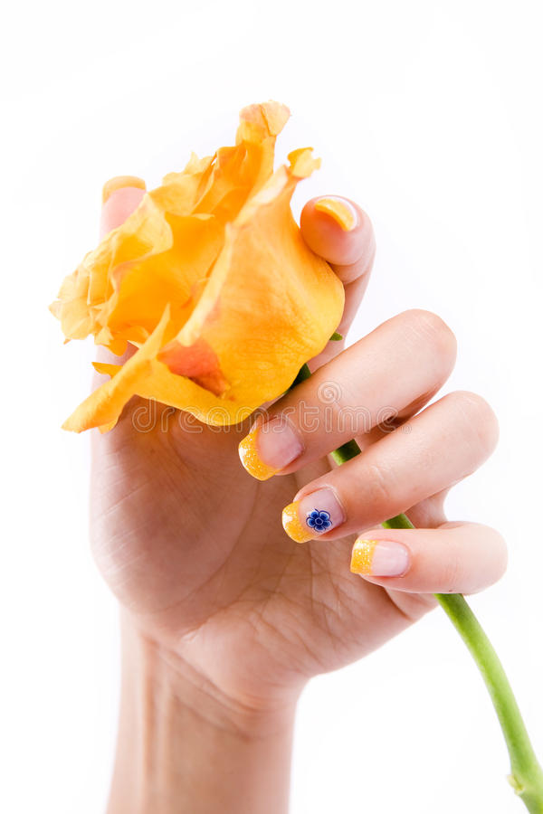 Nails and rose on white stock images