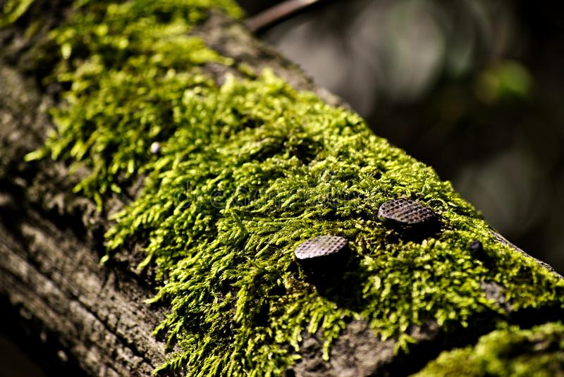 Nails on wood with moss royalty free stock photos
