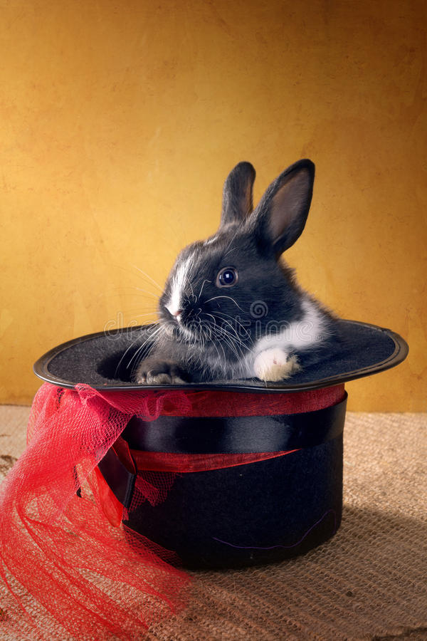 Nain néerlandais de lapin dans le chapeau noir magique image stock