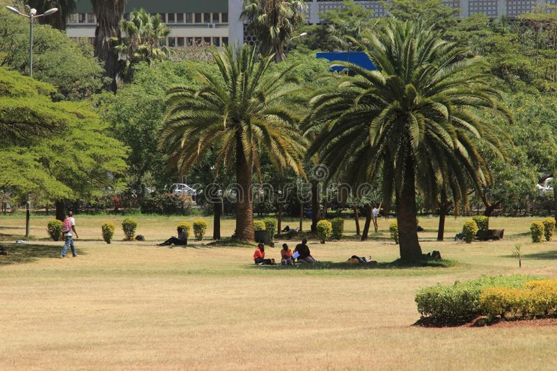 A park with palm trees in the city center and people on a picnic royalty free stock photo