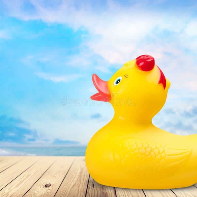 Naissance du canard en caoutchouc images stock