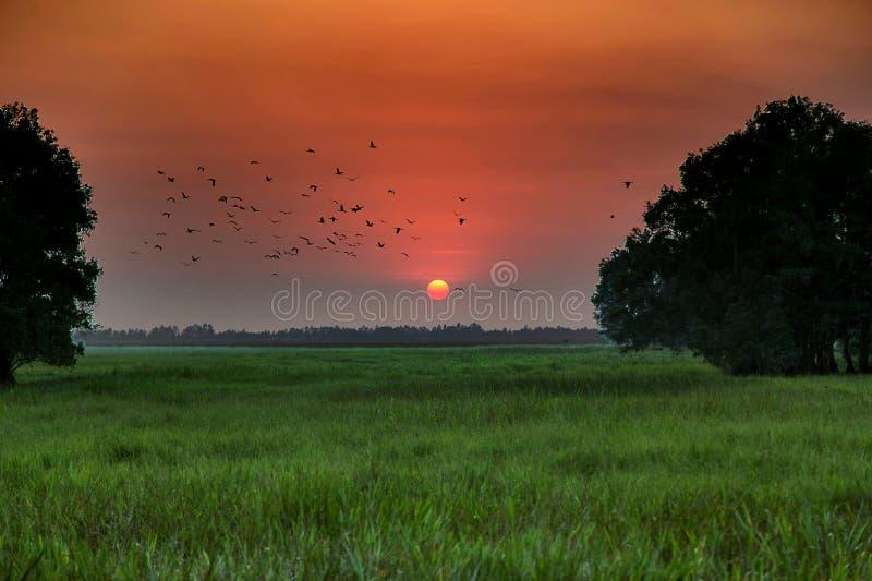 Naissez au cajeput d'oiseau en Dong Thap Province, Vietnam images libres de droits