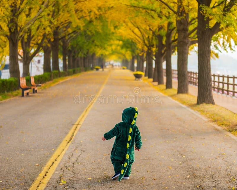 Najaar bij Asan Gingko Tree Road in Seoul, Zuid-Korea royalty-vrije stock fotografie