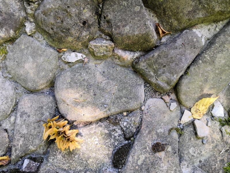 Najaar geel blad op de stenen in het bos stock afbeelding