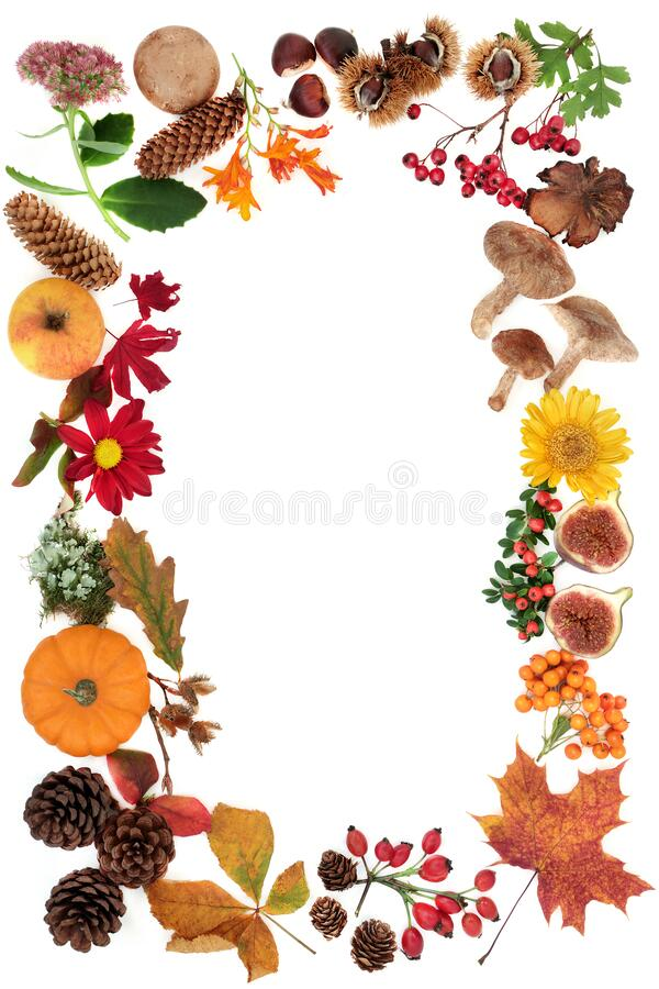 Najaar Harvest Festival Background Border Border stock foto