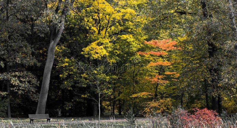 Najaar in het park Selectief kleurenbeeld van herfstbomen in het park royalty-vrije stock fotografie