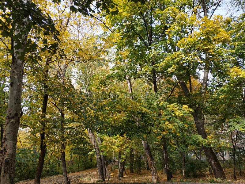 Najaarsdag Vloeiing De herfst staat aan de deur Najaarslandschappen Gele bomen Herfstbomen stock fotografie