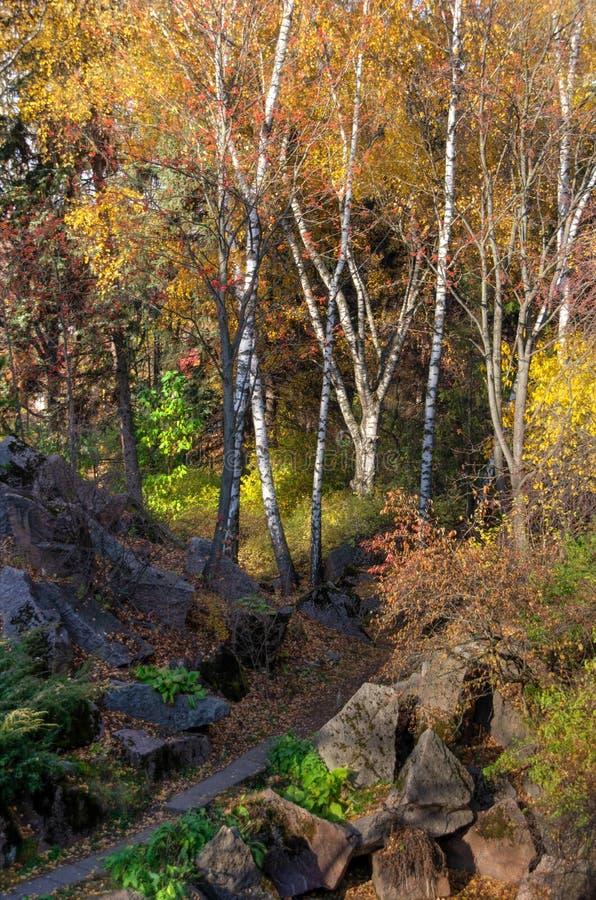 Najaarspark Moskou Herfstbomen op zonnige dag royalty-vrije stock afbeeldingen
