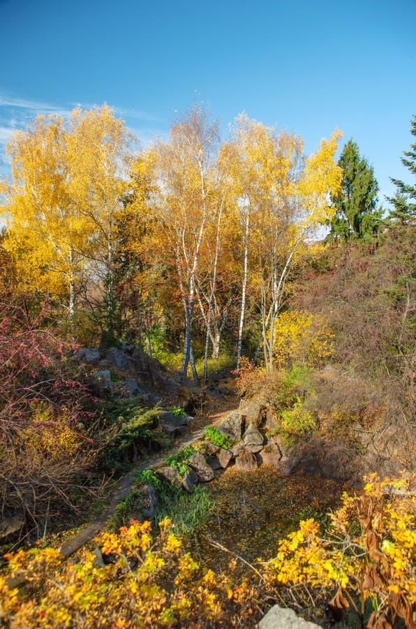 Najaarspark Moskou Herfstbomen op zonnige dag stock afbeelding