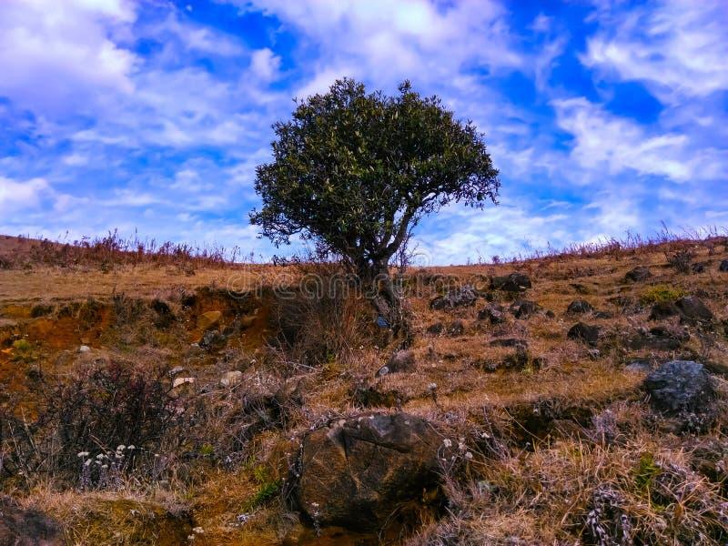 najlepsze drzewo góry fotografia royalty free