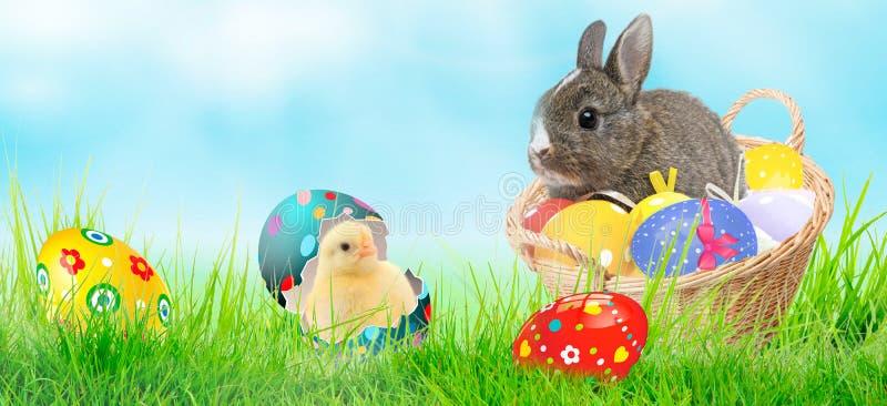 Najlepszego przyjaciela królika kurczątko z Easter jajkami i królik zdjęcia royalty free