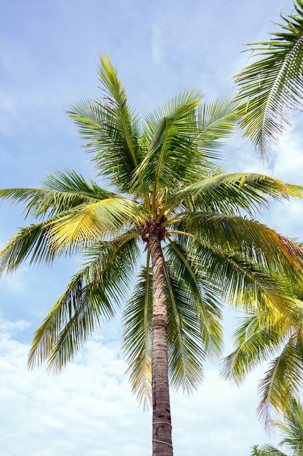 Najlepszy fotografia drzewka palmowego lub koksu morze z niebieskiego nieba tłem, fotografia royalty free