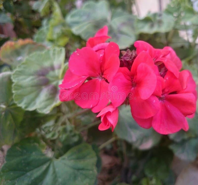 Najlepszy kolor w naturze i cichym momencie fotografia royalty free