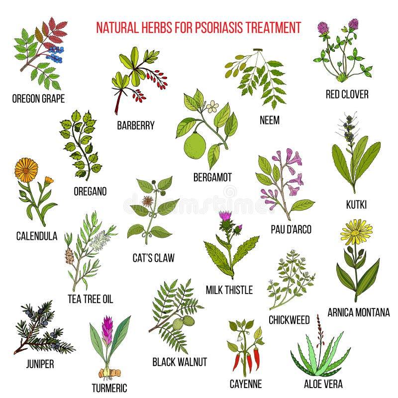 Najlepszy naturalni ziele dla łuszczycy traktowania ilustracja wektor