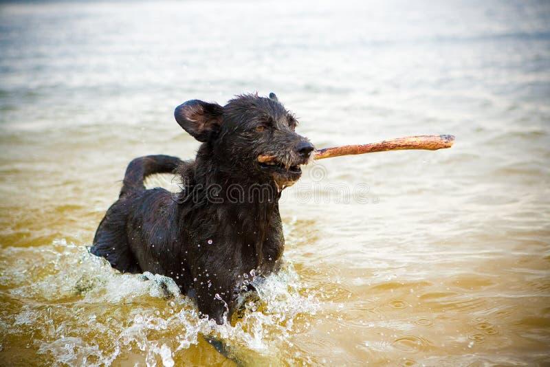 najlepszy pies fotografia royalty free