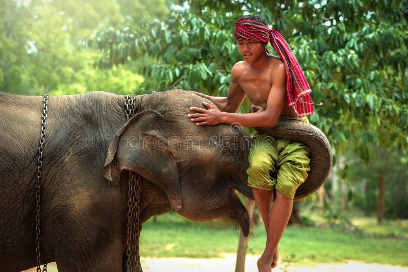 Najlepszy przyjaźni Mahout z słoniem zdjęcia royalty free