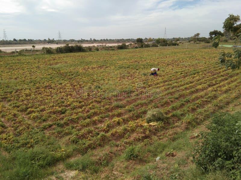Najlepszy widok obrazek w gospodarstwie rolnym zdjęcie royalty free
