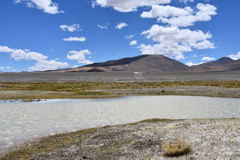 NAK fuertemente salino de Ruldan del lago cerca del pueblo de Yakra en Tíbet, China fotografía de archivo libre de regalías