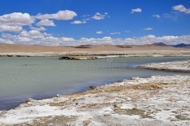 NAK fuertemente salino de Ruldan del lago en T?bet, China imagenes de archivo