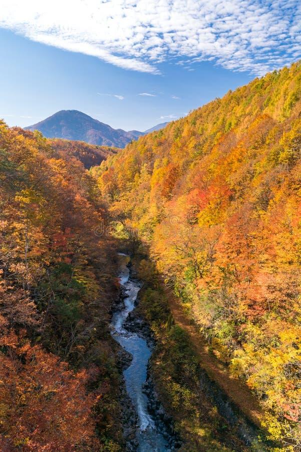 Nakatsugawa Fukushima jesień obraz royalty free