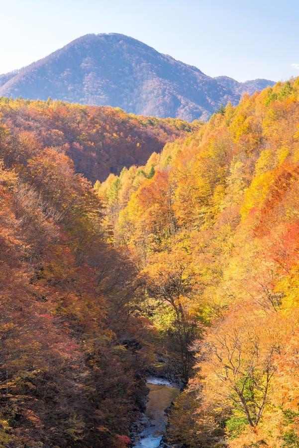 Nakatsugawa Fukushima jesień fotografia royalty free