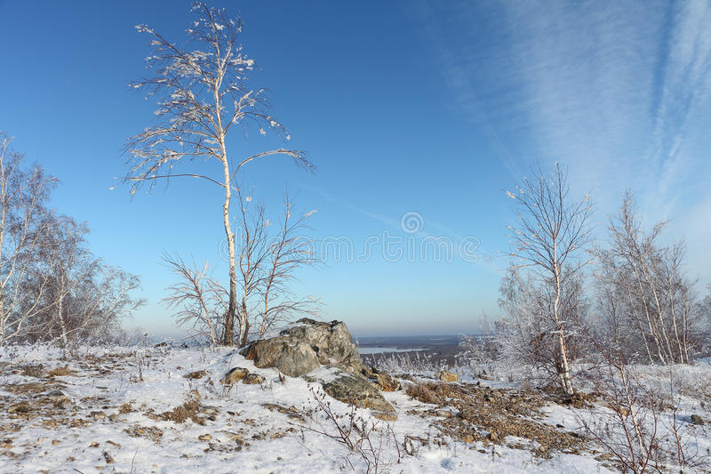 Naked birch in hoarfrost standing on the hill. At a stone against the sky in the winter royalty free stock photography