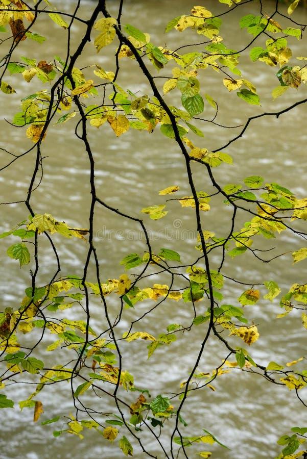 Autumn Leaves On A Tree. Warm Autumn Day. Stock Photo