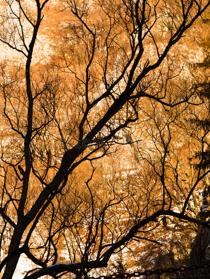 Download Naked branches stock photo. Image of brown, backlight - 23772746