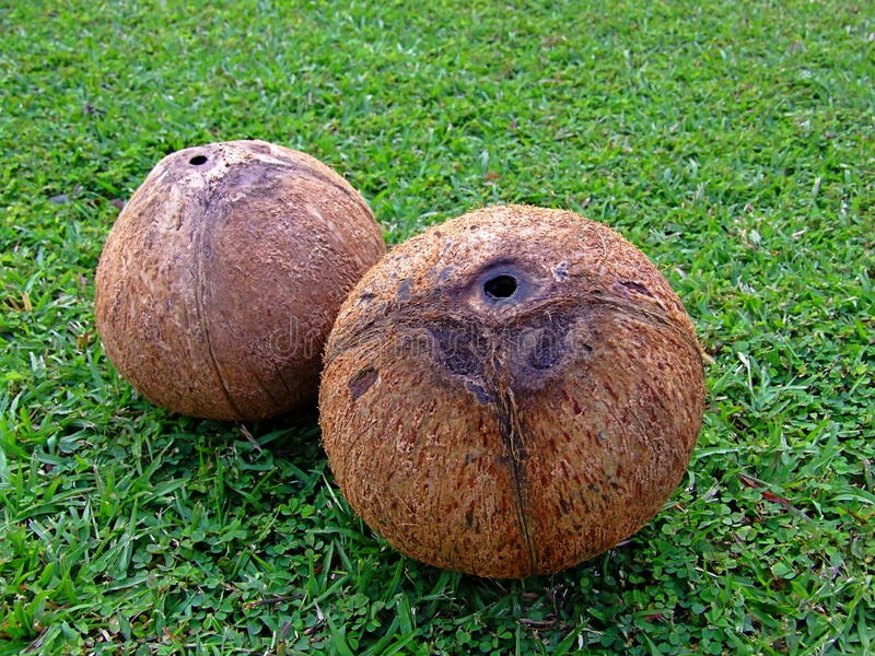 Naked coconuts stock image