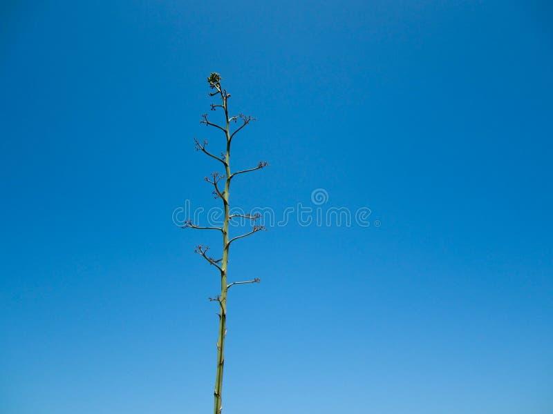 Naked Green Tree Royalty Free Stock Photography