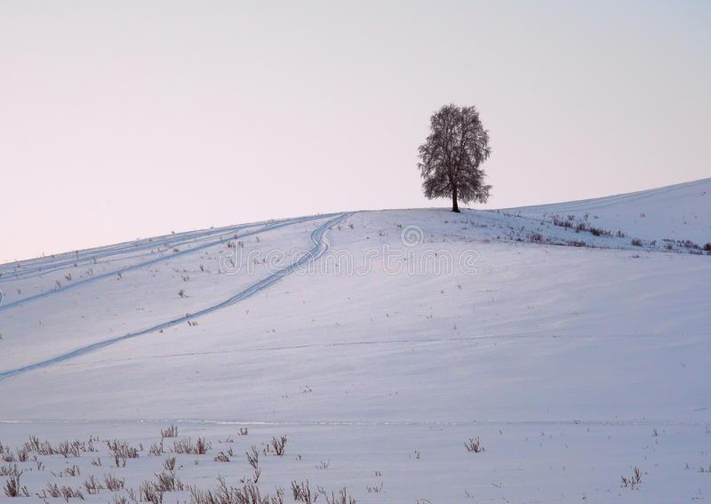 Naked tree on a snowy hill. Naked lonely tree on a snowy hill on a winter morning. Silver blue color. Pure nature of Siberia, Altai Krai, Russia 2019 royalty free stock photos