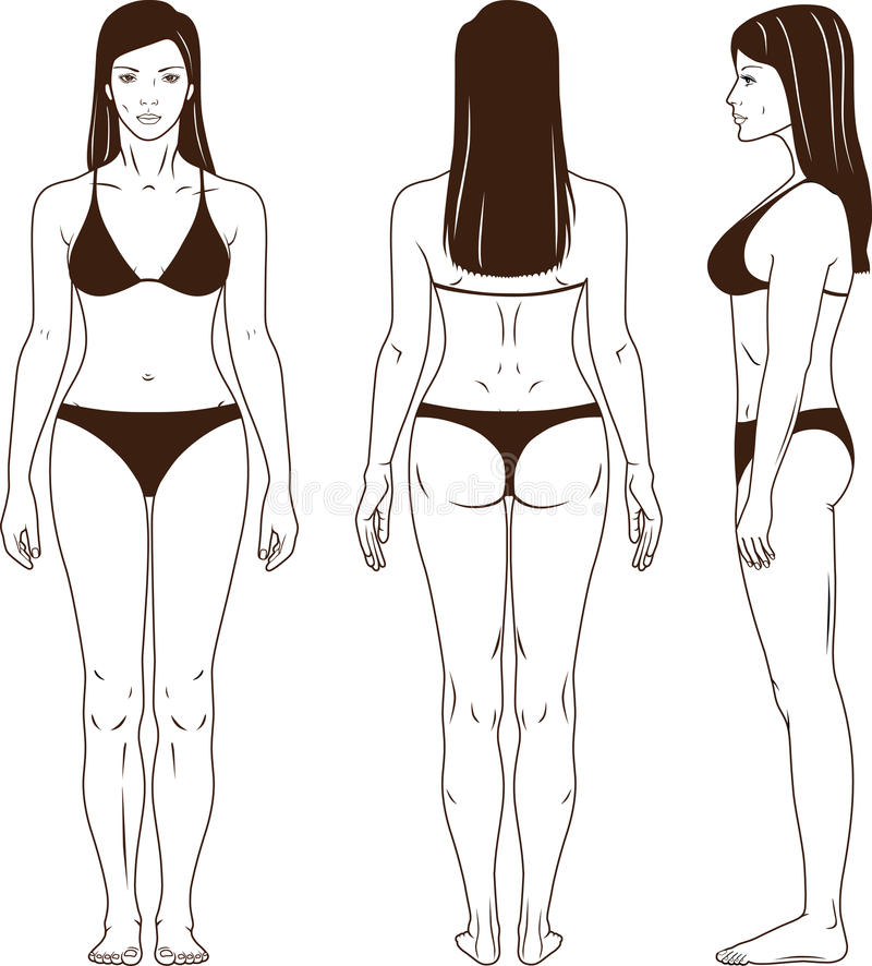 Download Naked Standing Woman Vector Stock Vector - Image: 22667941
