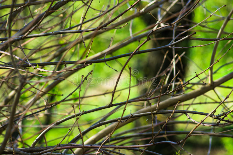 Naked tree branches with buds in spring time green foliage background, awakening nature, tranquility. Purity concept royalty free stock photos