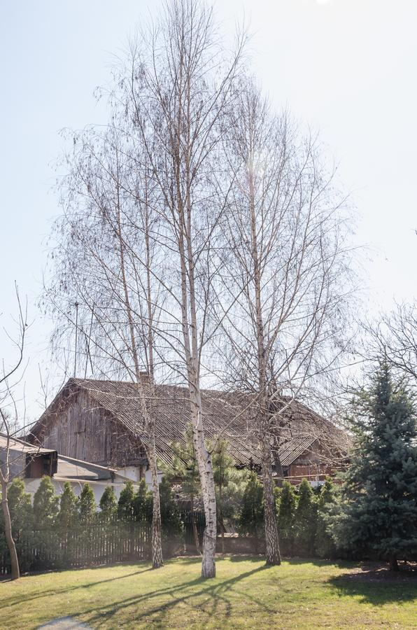 Naked tree in front of the house. Three birches in the garden of the back yard stock photos