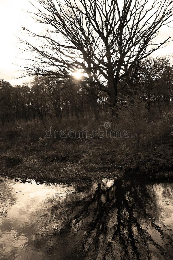Free Naked Tree Reflected In Ripply Water Of DuPage River Stock Image - 165260831