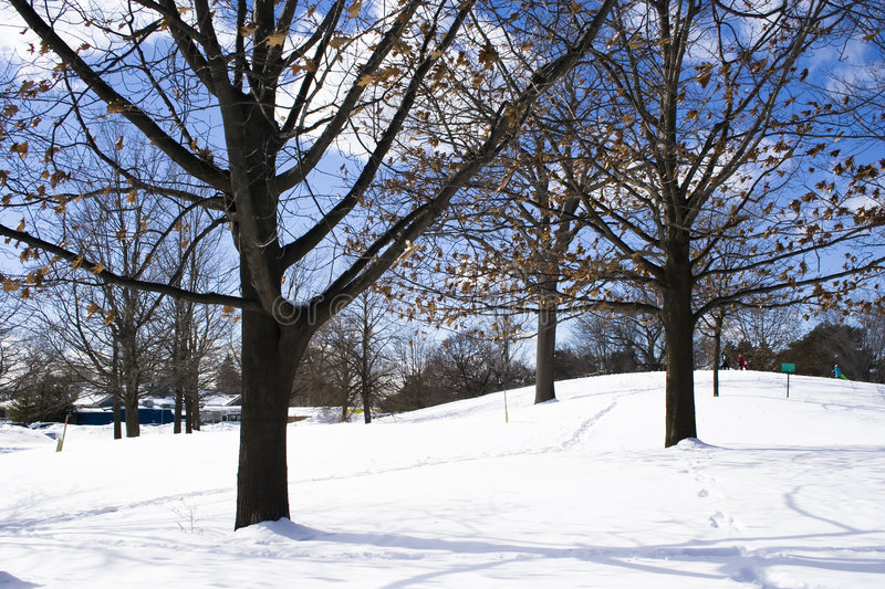 Download Naked trees in winter stock image. Image of background - 4663157