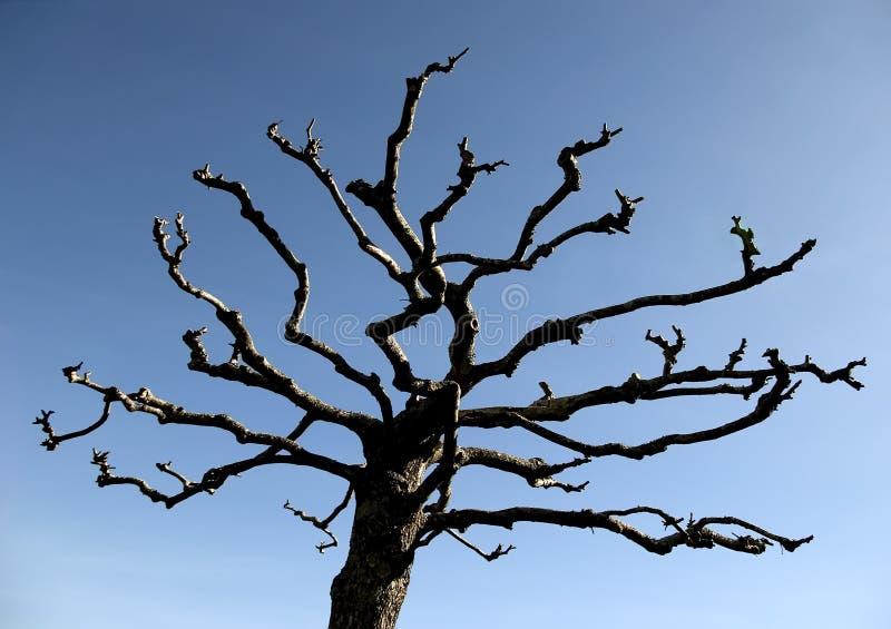 naken tree royaltyfri foto