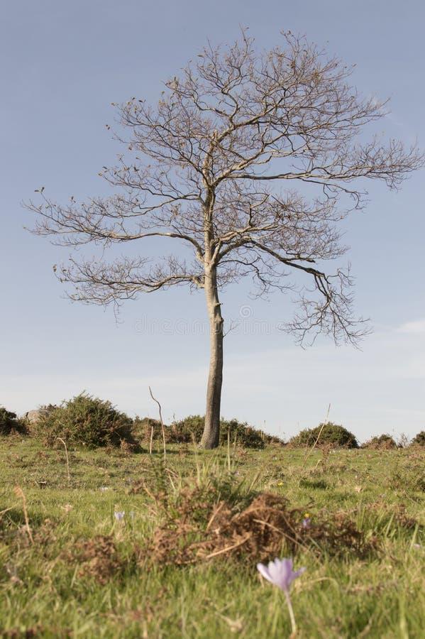naken tree arkivfoton