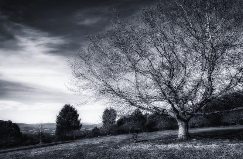 Naket träd och en bänk arkivbilder