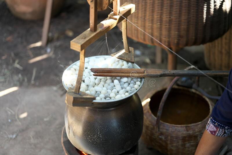 Spinning Silk Thread from Silkworm Cocoons stock photography