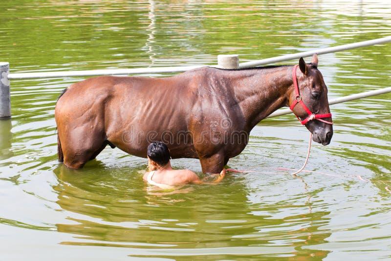 Nakhonratchasima, TAILANDIA - 30 luglio 2015: Un uomo lava il cavallo immagini stock