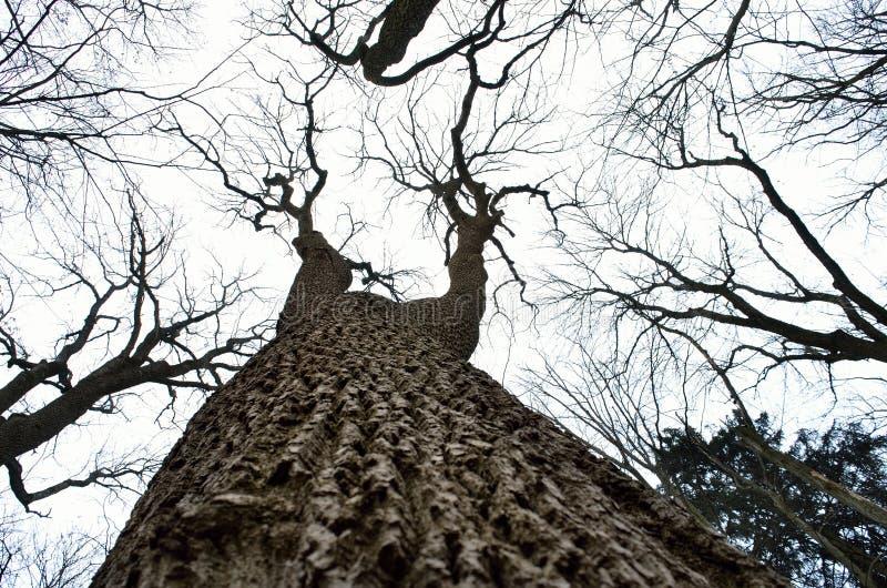 Nakna trädfilialer mot bakgrunden för molnig himmel arkivfoton