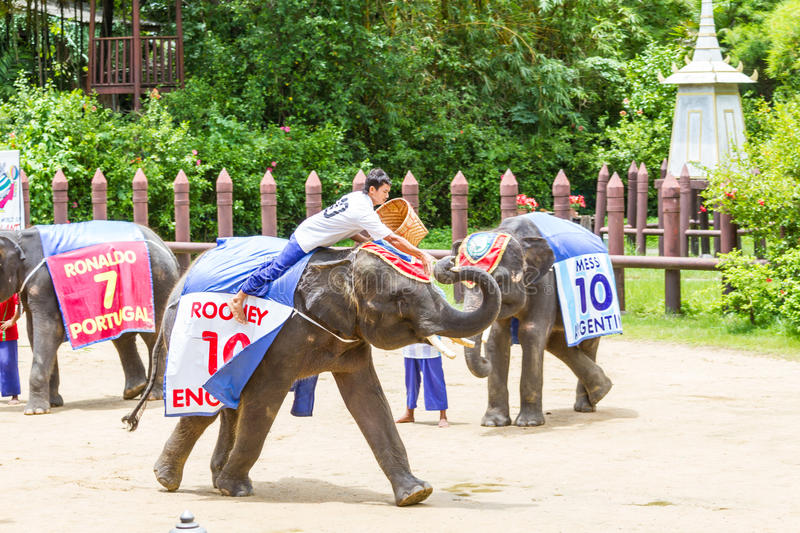 NAKORNPATHOM THAILAND, June 20: Elephants play game performing royalty free stock photography