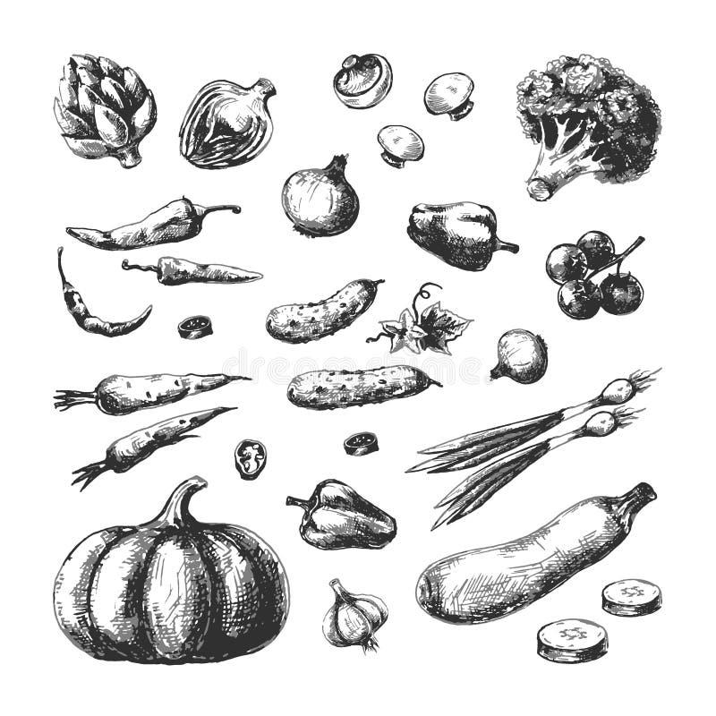 Nakreśleń warzywa Dyniowych ogórkowych brokułów szampinionu marchwiany cebulkowy pomidor Jarzynowa ręka rysujący weganinu rocznik ilustracja wektor